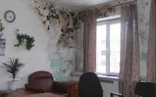 Как избавиться от грибка на потолке в ванной: профилактика и решительные действия
