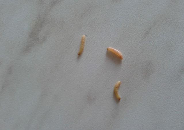 белые черви на потолке в кухне