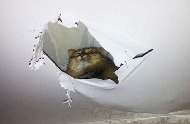 лопнул потолок натяжной