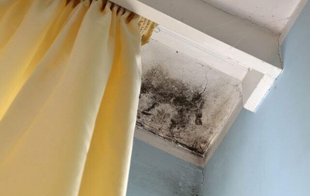 грибок на потолке в квартире как избавиться